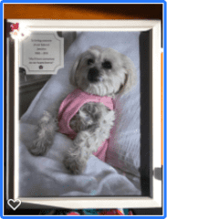 I love this memorial picture of my parent's dog that I gave them after their dog Jasmine passed away.  It was a loss to our whole family