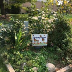 A butterfly, bee and bird garden I cultivated this year for the Community.
