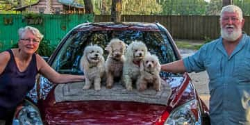 """Four circus poodles in Edgewater, Florida. They were a hoot! Jane put them through their tricks. Retrieving them all back into the house was a challenge. The owner neglected to tell us that you just point to the door and say """"house."""" :-)"""