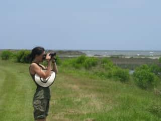 Birdwatching at Bull Island, SC
