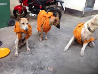Monks dressed temple dogs in old robes to keep warm.