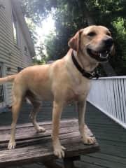 Beau, the wonder dog