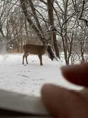 This doe seems to live here, too