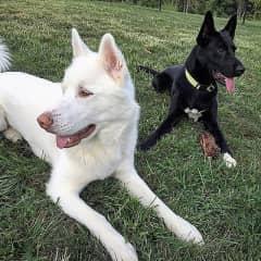 Granddog Elsa (black) and longtime room mate Meeko