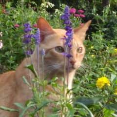 Félix no jardim.