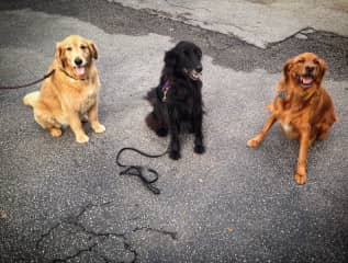 Three Amigos...Andy, Brody and Harley