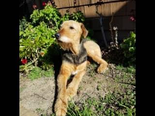 Izzy enjoying the California sun (pet sit)