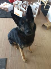 This is Raspy. We love him.