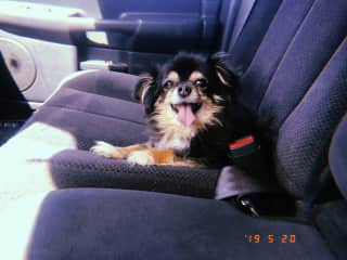 My dog Boots, she is 14 years old and loves truck rides :)