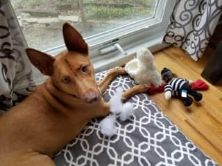 It IS a chew toy!
