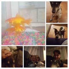 San Francisco doggie and fish
