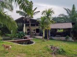"""This is the back porch and outdoor """"thai style"""" kitchen. this is where I spend most of my time. The porch faces my fish pond and a small palm grove. You can also see the mountains of Sri Lanna National Park."""