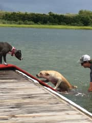 Helping the pups get back up on the dock after playing in the water