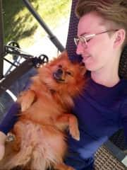 Pomeranian Baloe, during one of 3 week long house- and petsits