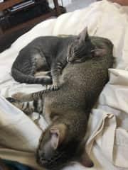 Mai and Tai