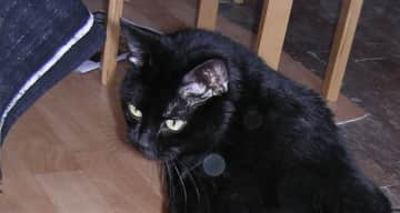 Our last cat Orphee