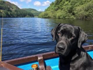 Mungo - Let's go fishing.....