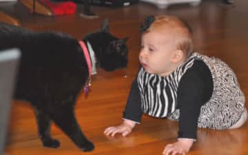 This is my first granddaughter seven years ago getting to know my Cat, Hardey.  He was good with anyone and everyone.