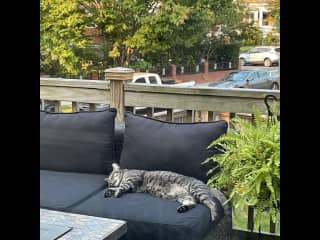 snoozing on my deck.