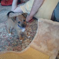 Zeus - a foster puppy