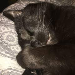 Felix napping....cuteness!