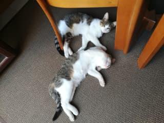 Romeo and Theo
