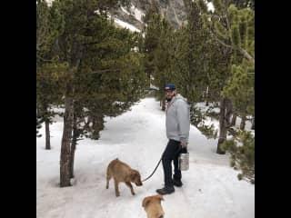 Brendan, Marley and Teddy hiking St. Mary's Galcier.
