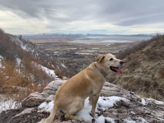 Our Dog Niko loves to hike.