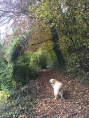 We love to be in nature with the dogs