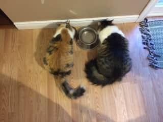Bella and Simon eating