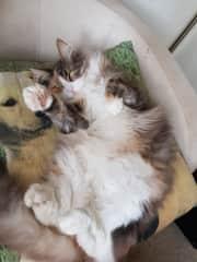 Cuddly Lola