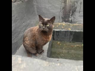 She came to us after an appeal online as her elderly owner died and no one had taken her in. She lives outdoors and doesn't like other cats. But is very friendly to humans if your on your own with her. She likes to perch on the window most days