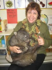 School and a wombat