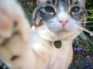 Mekena takes a selfie