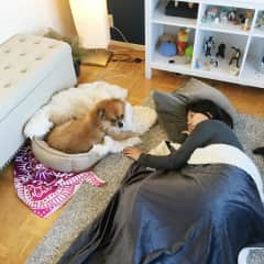 Look at how big this pomeranian is! We loved lounging around together