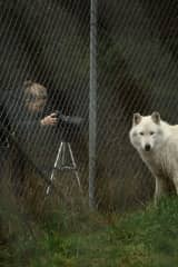 Jillian photographing rescued wolves at a sanctuary we support