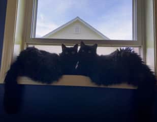 Stretch and Fenway in the window getting some fresh air