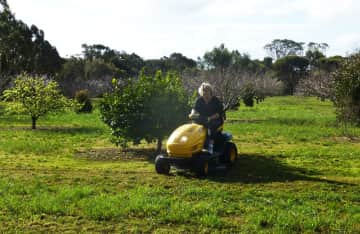 Laurie mowing 12-acre orchard