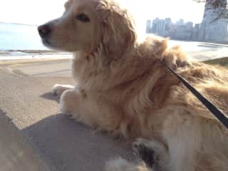 Scout loving his trips to Chicago Lakefront