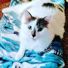 My beloved cat, Sadie!