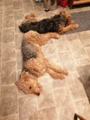 The dogs take up quite a lot of space when they're sprawling on the floor!