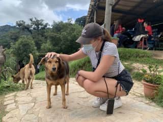 Giving some love to the street dogs in Guatemala