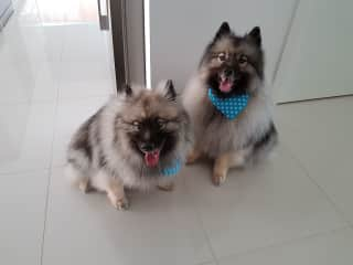 Shadow (left) Buddy (right)