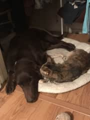 Bella loves Cooper.