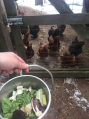 Me feeding the chickens from a past house sitting contract in BC. I absolutely love chickens!