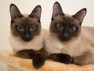 Bertie and Otto