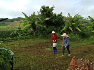 Working in longan tree fields at a work exchange