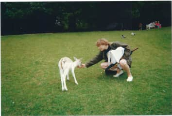 Attempting to stroke a deer, somewhere in the British Isles, maybe a Dyrham Park...