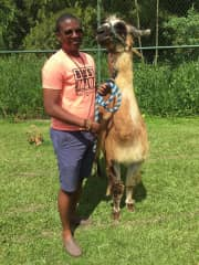 My fiancé Mayon with the llama called kuzco that I used to work with.