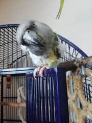 Curious Ringie!